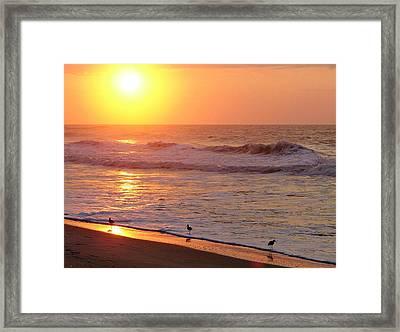 Sunrise At Ocean Isle Framed Print by Kelly Nowak