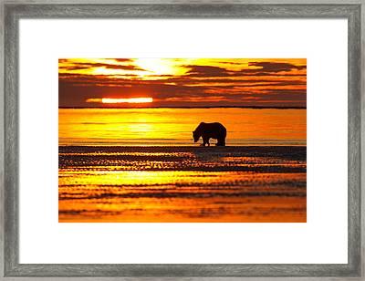 Sunrise Bear Framed Print