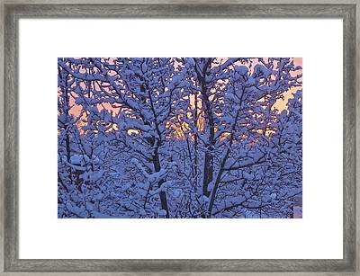Sunrise Branches Framed Print by Alice Mainville