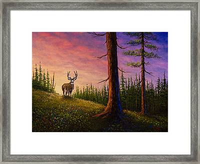 Sunrise Buck Framed Print by C Steele