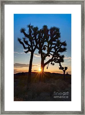 Sunrise Burst - Joshua Trees Beautifully Lit Joshua Tree National Park. Framed Print by Jamie Pham
