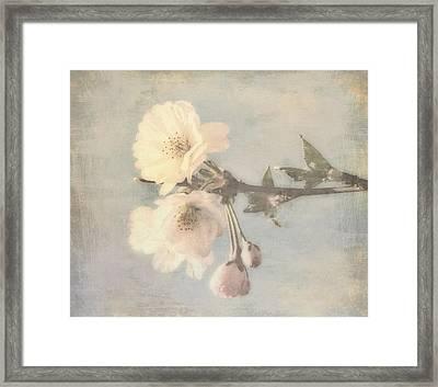 Sunrise Cherry Blossoms Framed Print by Bernie  Lee