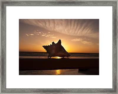 Sunrise Conch Framed Print