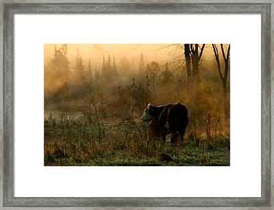 Sunrise Feeding Framed Print by Paul Wash