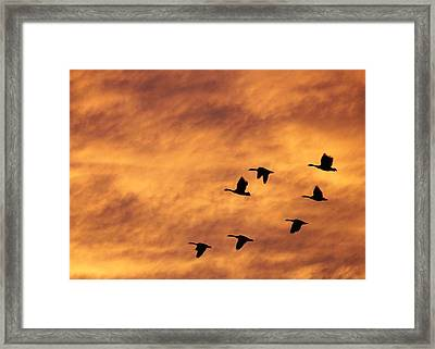 Sunrise Flight 2 Framed Print by Diane Alexander