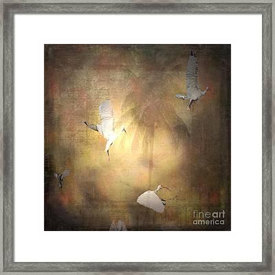 Sunrise Flight Framed Print by Irma BACKELANT GALLERIES