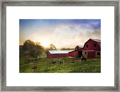 Sunrise Grazing Framed Print by Debra and Dave Vanderlaan