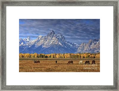 Sunrise Grazing Framed Print by Mark Kiver