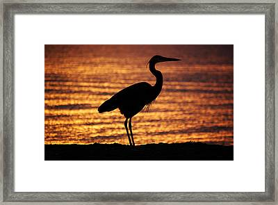 Framed Print featuring the photograph Sunrise Heron by Leticia Latocki