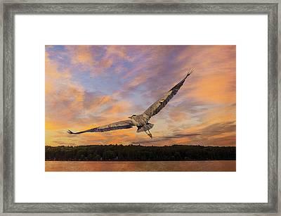 Sunrise Heron Framed Print by Tracy Munson