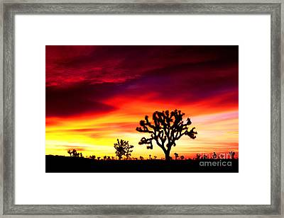 Sunrise In Joshua Tree Nat'l Park Framed Print