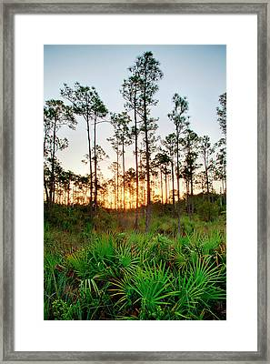 Sunrise In Long Pine Area Of Everglades Framed Print by Terry Eggers