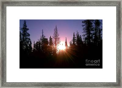 Framed Print featuring the photograph Sunrise In The Forest by Chris Tarpening