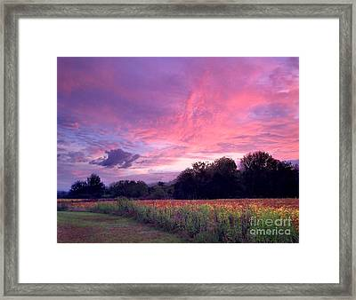 Sunrise In The South Framed Print