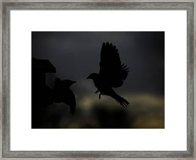 Sunrise Marauder Framed Print by Mark Alder