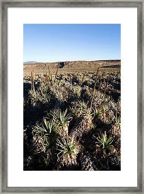 Sunrise Near Keyrensa At The Escarpment Framed Print by Martin Zwick