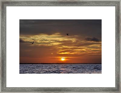 Sunrise On Tampa Bay Framed Print by Bill Cannon