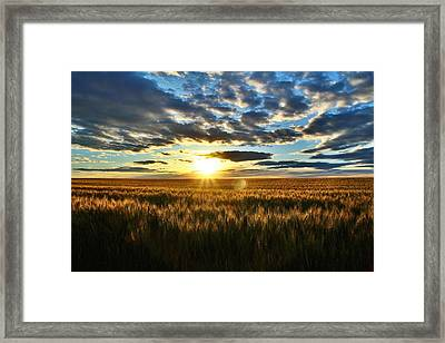 Sunrise On The Wheat Field Framed Print by Lynn Hopwood