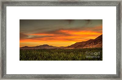 Sunrise Over A Corn Field Framed Print by Robert Bales