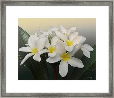 Sunrise Over Frangipani Flowers Framed Print by IM Spadecaller