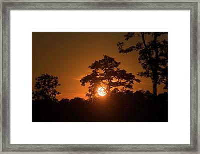 Sunrise Over Kaziranga National Park Framed Print by Steve Winter
