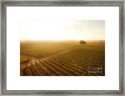 Sunrise Over The Vineyard Framed Print by Diane Diederich