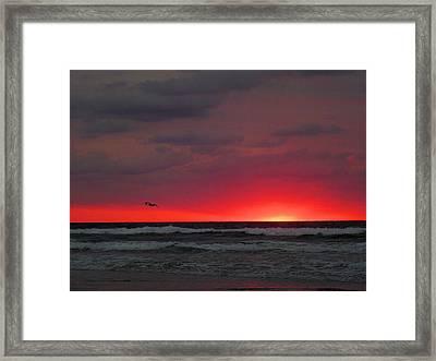 Sunrise Pink Framed Print by JC Findley