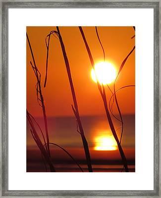 Framed Print featuring the photograph Sunrise Plant by Nikki McInnes