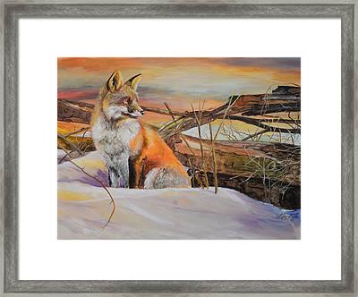 Sunrise Red Fox Framed Print by Alvin Hepler