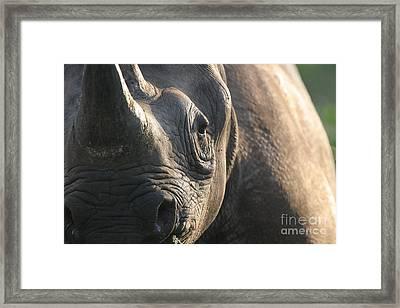 Sunrise Rhino Framed Print by Alison Kennedy-Benson