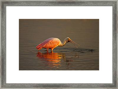 Sunrise Roseate Framed Print by Phil Stone