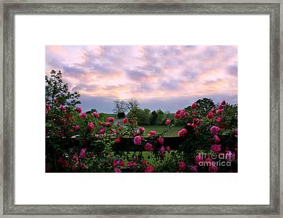 Sunrise Roses Framed Print by Leslie Kirk