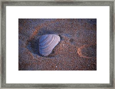 Sunrise Shell Framed Print