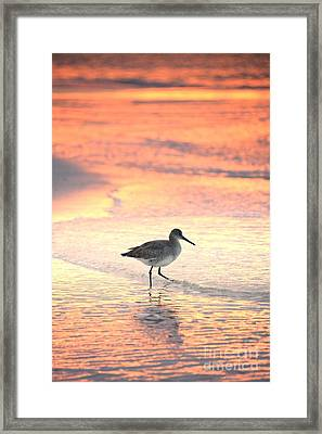 Sunrise Shorebird Framed Print