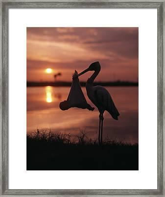 Sunrise Silhouette Of Stork Carrying Framed Print