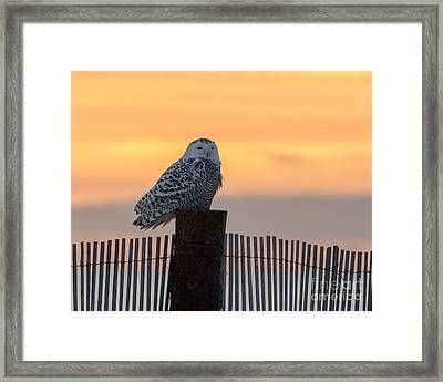 Winter At The Shore Framed Print