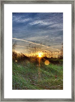 Sunrise Through Grass Framed Print by Tim Buisman