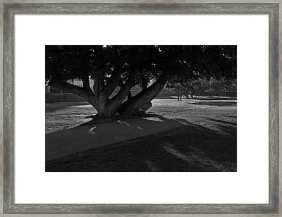 Framed Print featuring the photograph Sunrise Through Old Tree by Inge Riis McDonald