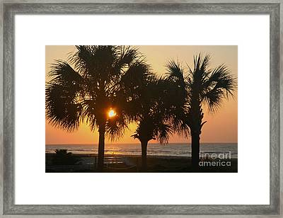 Sunrise Through The Palms Framed Print by Kevin McCarthy