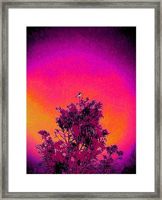 Sunrise To Sunset Nature Is Beautiful Framed Print by David Mckinney