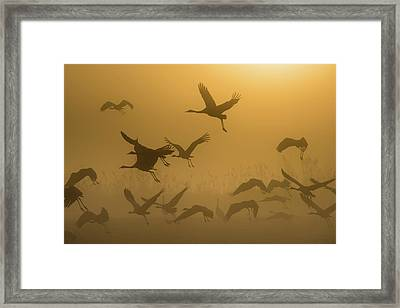 Sunrise With Cranes Framed Print