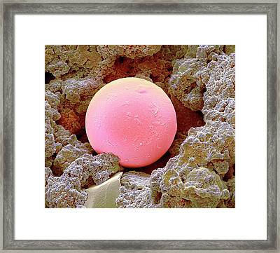Sunscreen Microsphere Framed Print