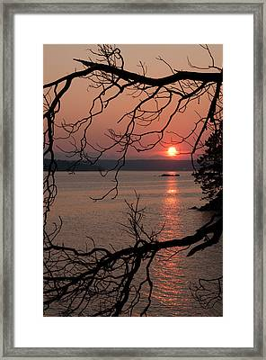 Sunset And Madrona Tree Framed Print