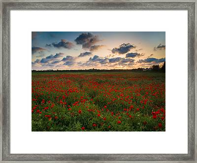 Sunset And Poppies Framed Print by Meir Ezrachi