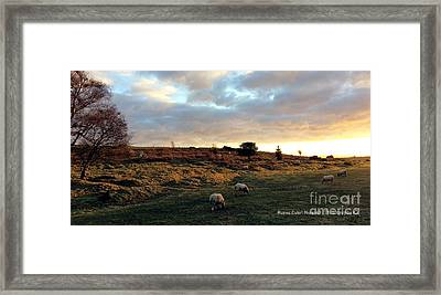 Sunset And Sheep Framed Print by Merice Ewart Marshall