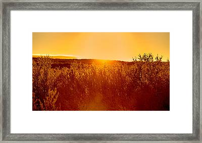 Sunset And Trees In The Frozen Framed Print by Panoramic Images