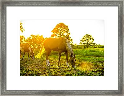 Sunset At The Barb Ranch Framed Print