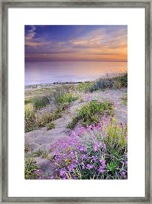 Sunset At The Beach  Flowers On The Sand Framed Print by Guido Montanes Castillo