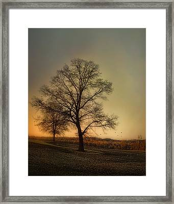 Sunset At The Cotton Field Framed Print by Jai Johnson