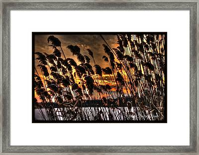 Framed Print featuring the photograph Sunset At The Pond 5 by Michaela Preston